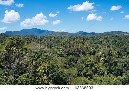 aerial from skyrail above rainforest canopy in barron gorge national park and mountain peaks along horizon near cairns of queensland australia