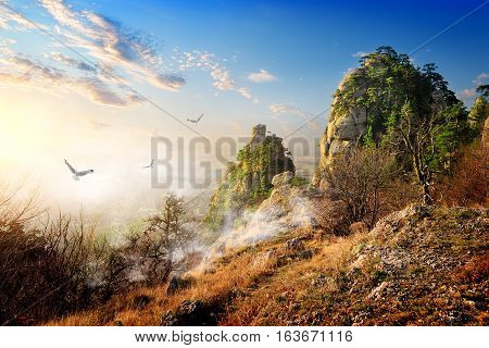 Birds over big cliffs in the autumn morning