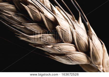 Ear Grain On Black