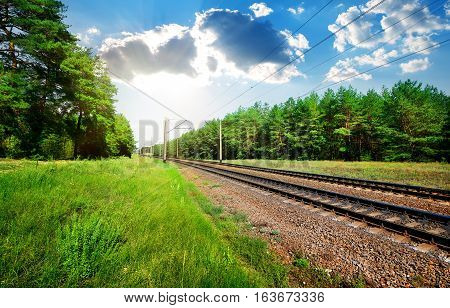 Railroad through the pine forest at sunny day