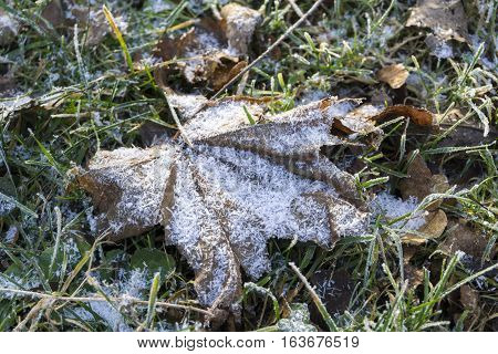 Frozen Leaves on the ground. Frozen Nature
