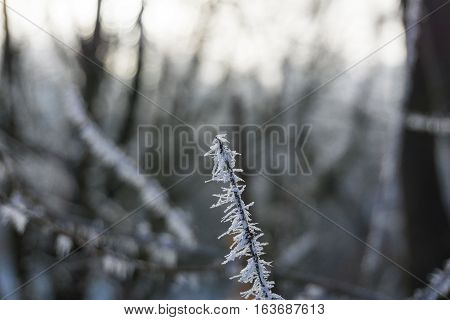 Frozen Branch with Ice Crystals. Frozen Nature
