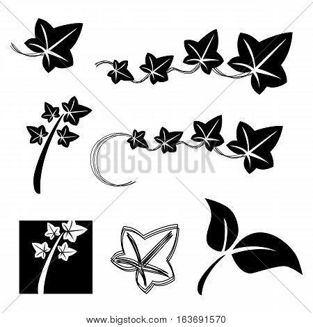 hand drawn business logo lvy flower icon set in black color isolated on white background. vector illustration
