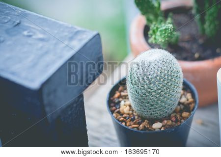 Little cactus plant in the flower pot. Cactus plants in retro effect image.(selective focus)