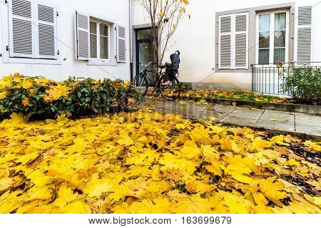 Yellow Cover Of Autumnal Leaves Near Ouse Entrance