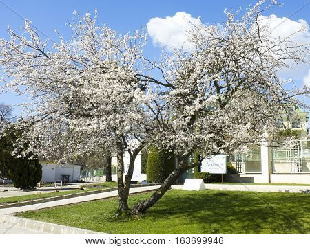 SAINTS CONSTANTINE AND HELENA BULGARIA - APRIL 04 2015: spring in Saints Constantine and Helena resort the oldest first sea resort of Bulgaria exists from 19 century.