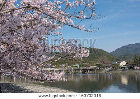 Cherry blossom Arashiyama in spring Kyoto Japan