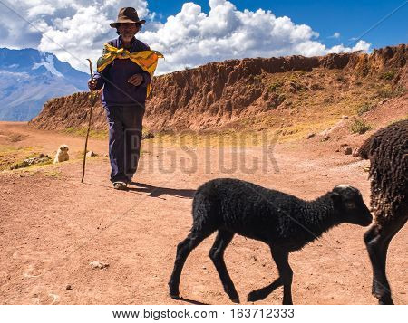 Peruvian Indian Farmer