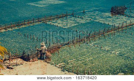 People collect seaweed plantations algal - Nusa Penida, Bali, Indonesia.