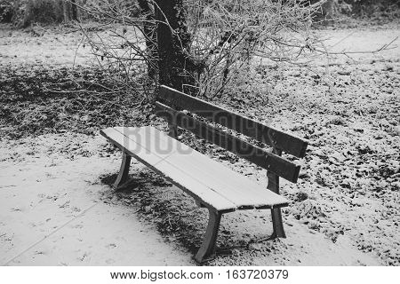 Empty bench covered with snow in witer park forest