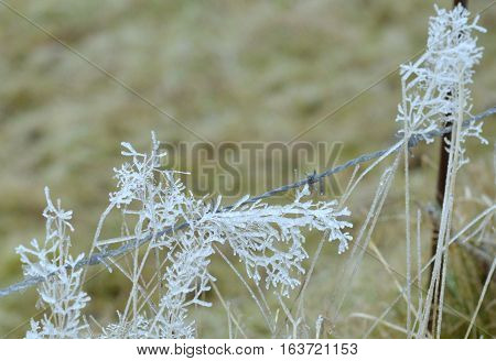 Frozen fog on some weed with bard wire
