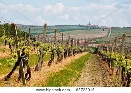 Spring Landscape With Green Vineyards And Town At Background. Grape Vineyards
