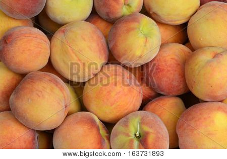 Close-up of Freshly Picked Juicy Peaches - Fruit