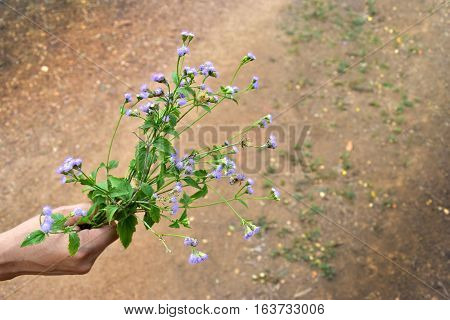 Asian men was carrying Little purple flowers and empty space for text.