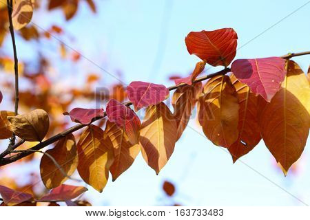 Red and yellow leaves in fall against a blue sky