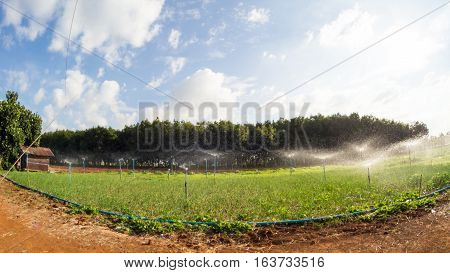 Wide/panorama vision lens angle fish eye vegetable farm vibrant with blue sky