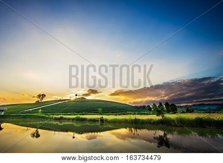 Sunset View Of Tea Plantation Landscape In Chiang Rai Province, Thailand.