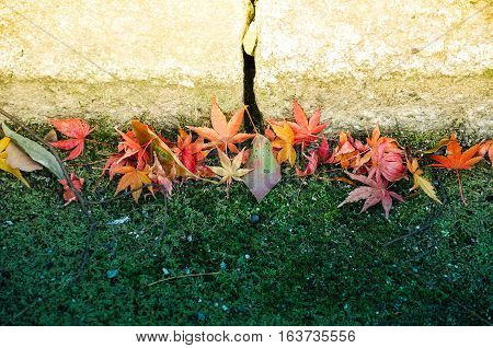 Fallen maple leaves on the green glass under the warm autumn sunlight Kyoto Japan