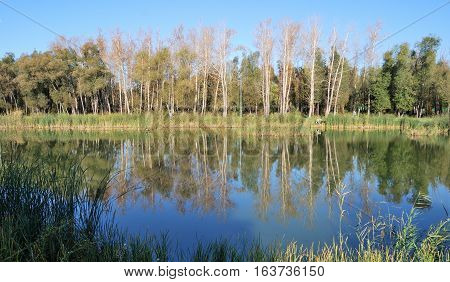 Autumn in Siberian forest Omsk region Russia