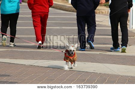 the owner keeps the dog on a leash and walk around the city