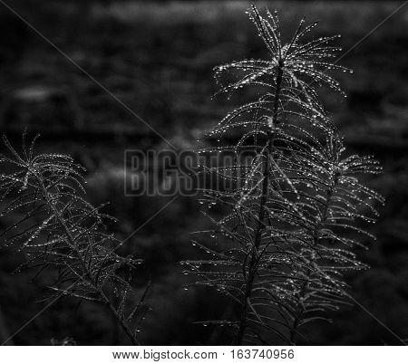 Winter in the forest. Shot in Denmark