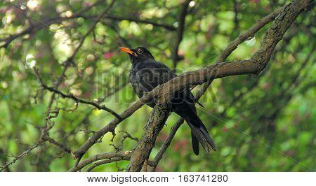 Cute bird sitting on a tree branch