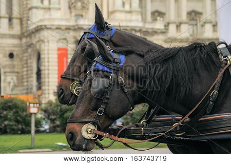 Two horses in a carriage walking on the street