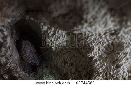 Large American toad hidden in a rock