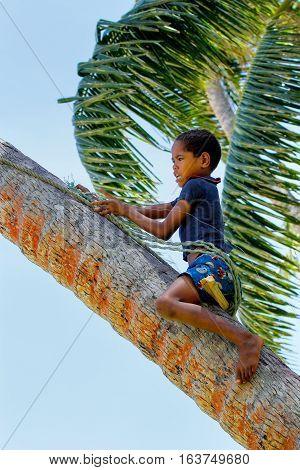 Lavena, Fiji - November 27: Unidentified Boy Climbs The Tree To Swing On A Rope Swing On November 27