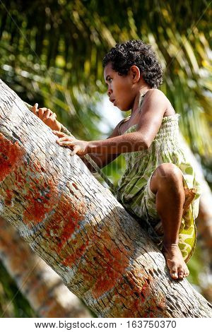 Lavena, Fiji - November 27: Unidentified Girl Climbs Palm Tree To Swing On A Rope Swing On November