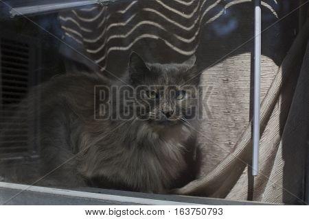 Cat In A Window