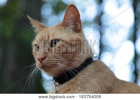 Portrait Of Gold Cat