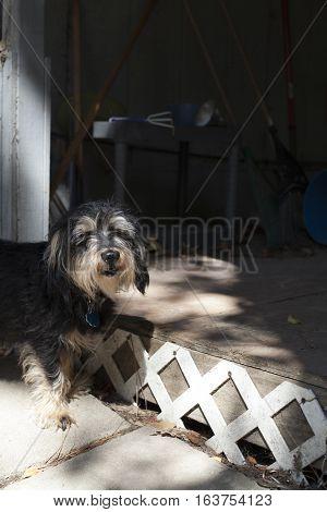 Small Dog At Porch