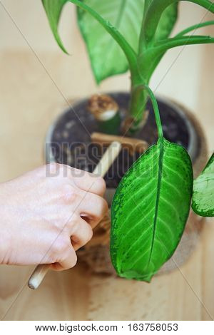 Hand of woman gardening potted plant. Close-up