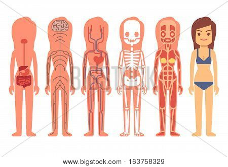 Medical Woman Body Anatomy Vector Vector Photo Bigstock