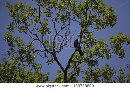 Crow perched in a lush, green tree