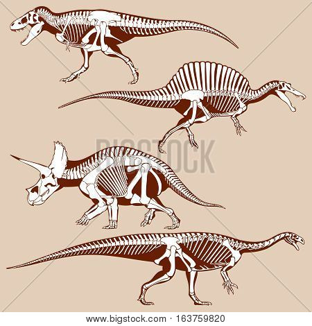 Gigantic dinosaurus silhouettes with skeletons vector set. Exhibit of dinosaur skeletons for museum, illustration of ancient predator dinosaur