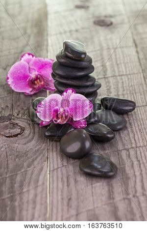 Phalaenopsis orchids and black stones close up