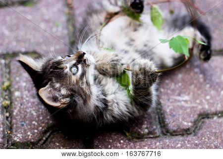 kitten playing with a plant, feline fun, kitten with leaves, kitten playing in the street