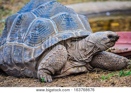 Hdr Aldabra Giant Tortoise Reptile Animal