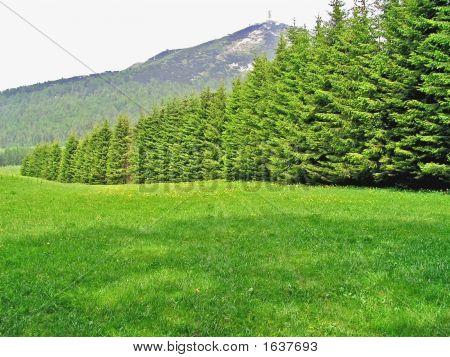 Row Of Decreasing Fir-Trees