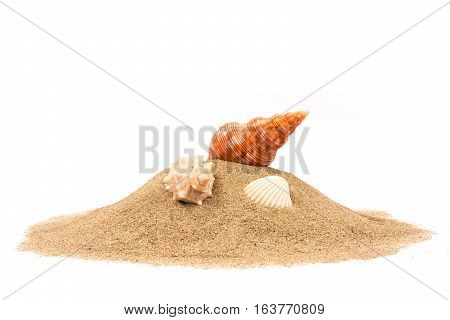 Isolated seashell on sand white background in studio