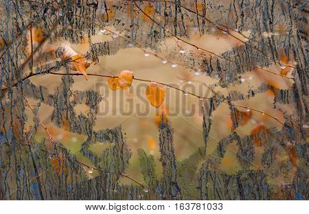 Autumnal beauty covered with ugliness background .
