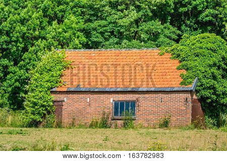 A very old and abandoned shed overgrown with trees and bushes. It's a sunny day in the summer season.