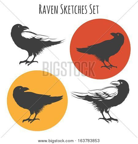 Vector raven or black crow bird ink drawing sketch with sketchy wings feathers. Set of crow animal tattoo. Vector illustration