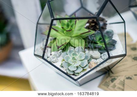 Beautiful miniature succulent bonsai plants and houseplants