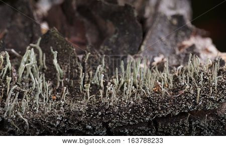 Lichen On Bark