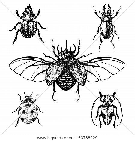 Hand drawn beetle set. Isolated black and white ink insects for design, icons, logo or print.