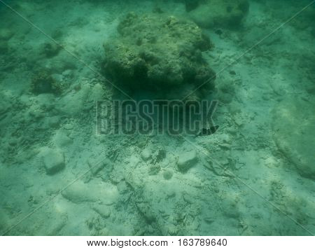 coral reefs in crystal clear sea water base