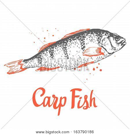 Hand drawn vector illustration with sketch carp. Fish Market. Seafood menu. Brush calligraphy elements for your menu design. Handwritten ink lettering.